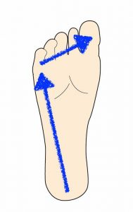 足裏の重心移動「あおり運動」三点足法 ウォーキングで足裏アーチを作ります。ふくらはぎがポンプ筋の役目を果たします。
